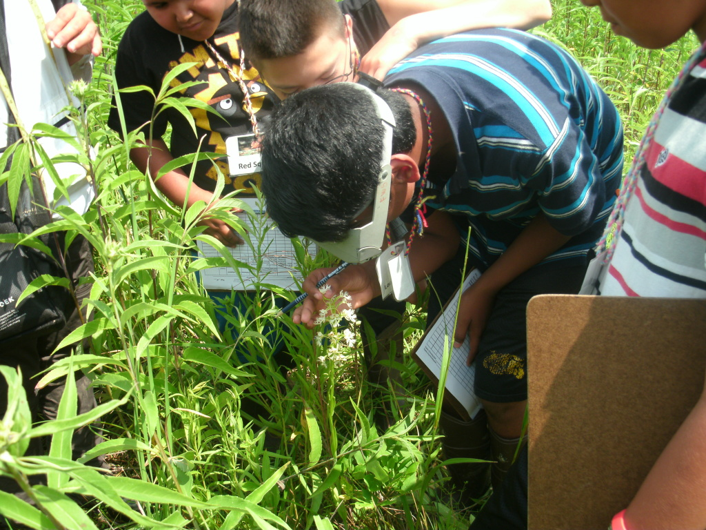 Children examining a rare prairie wildflower as part of the COOL Learning Experience summer program.