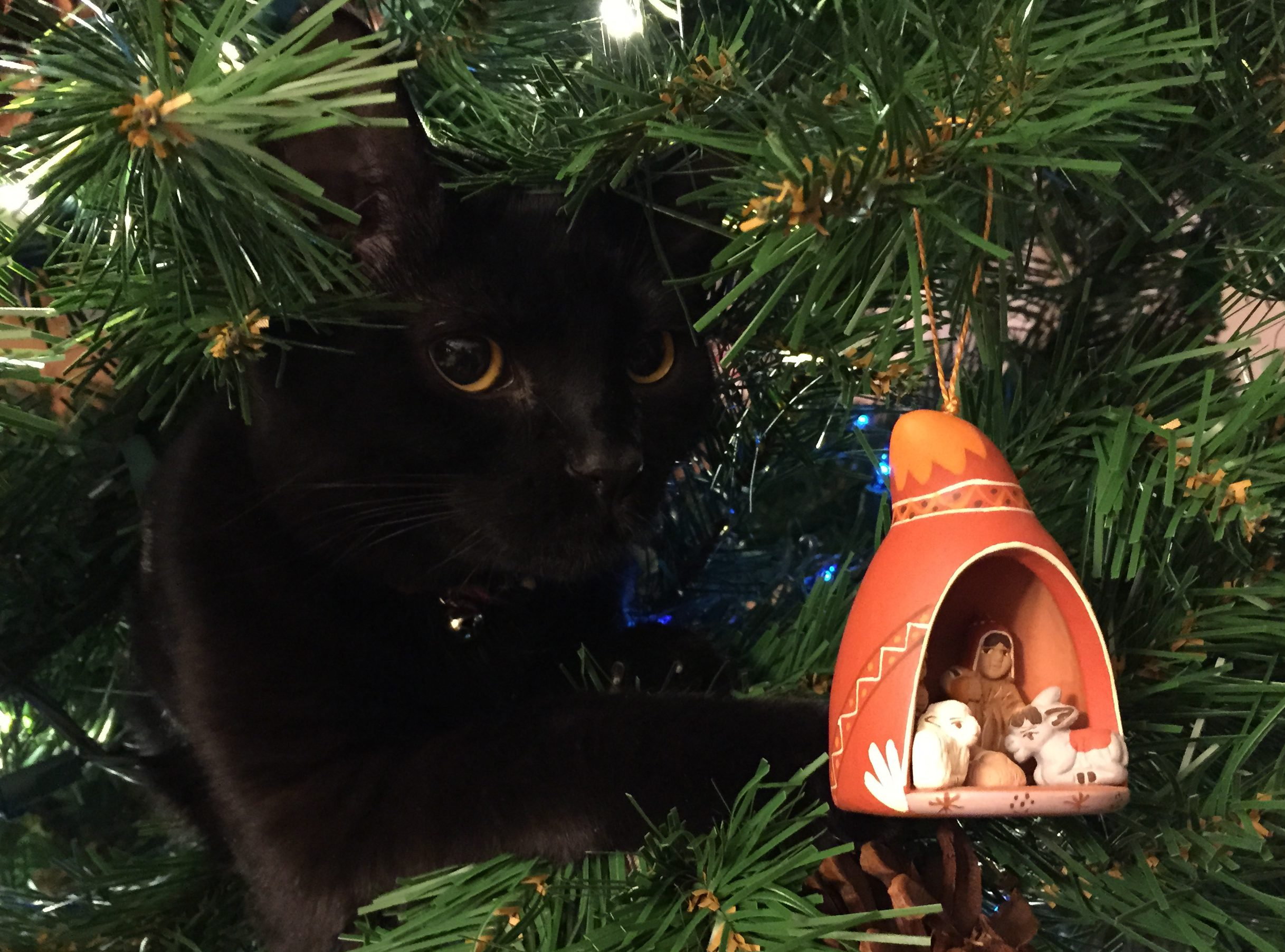 black cat perched in christmas tree with nativity scene ornament in the foreground